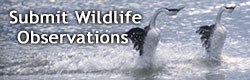 Submit Wild Species Observations